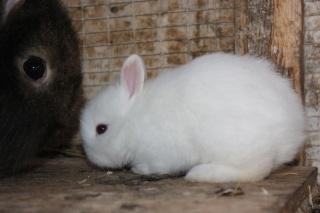 Bunny rescue! Ninen10