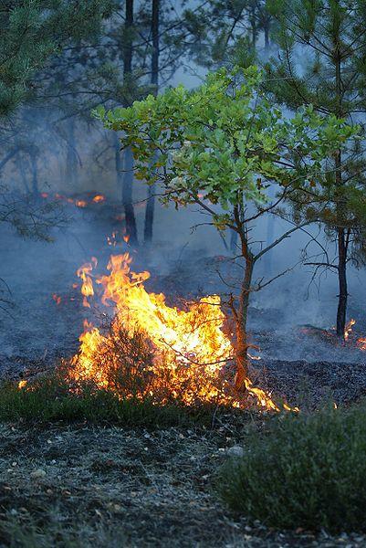 Les Incendies Divers 401px-11