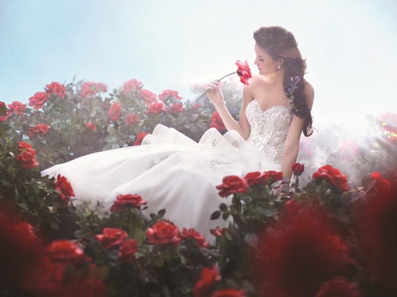 Belles Images 95095210