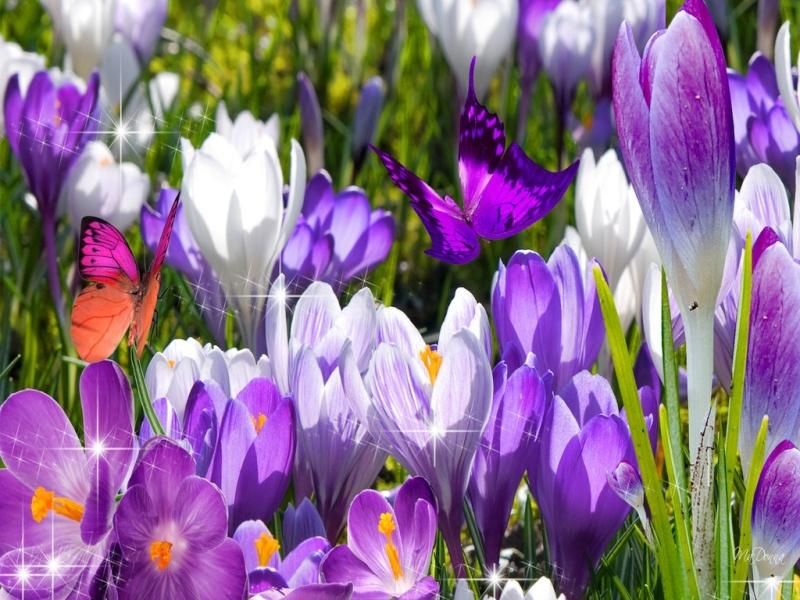 Belles Images 99936710