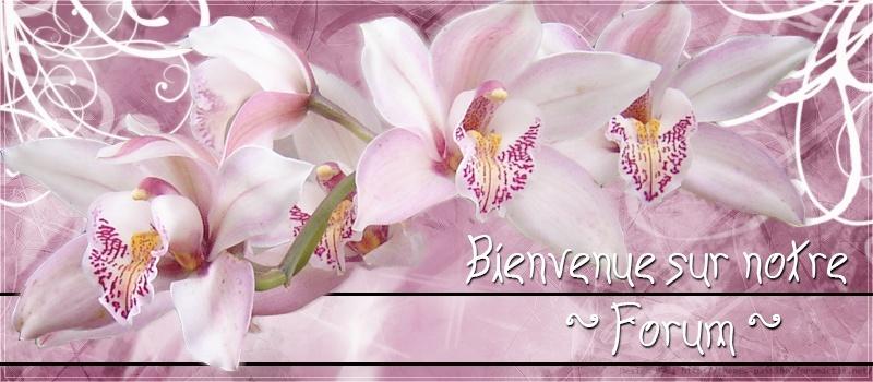 Belles Images I_logo11