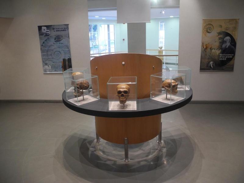 Musée de Préhistoire Libanaise Salle_10