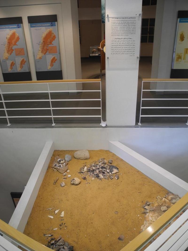 Musée de Préhistoire Libanaise Sol_pr10
