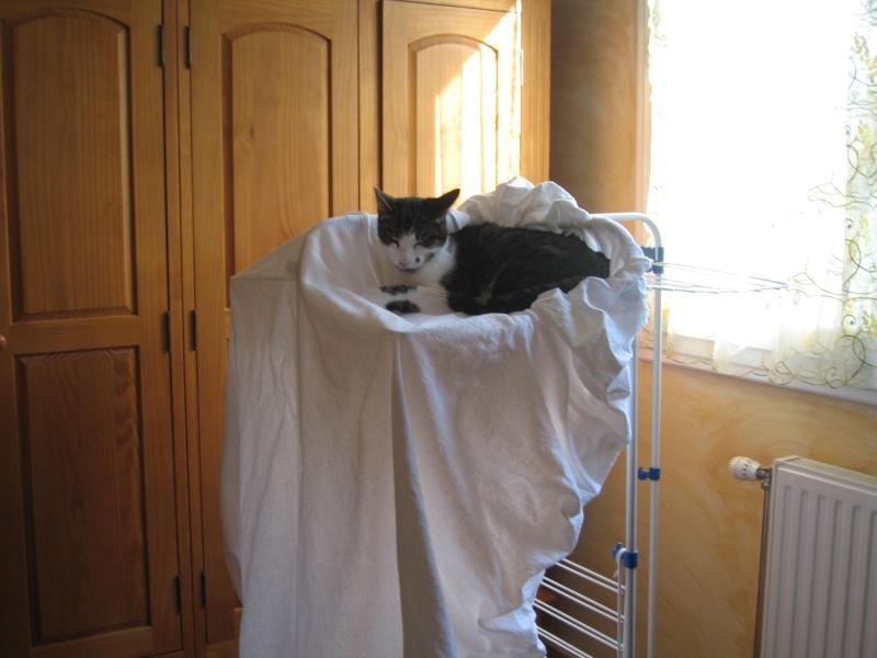 un nouvel arbre à chat ? Img_3435
