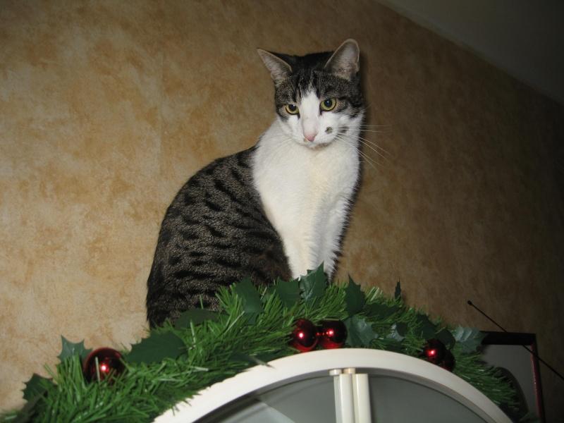 Lily et les décorations de Noël Img_3514