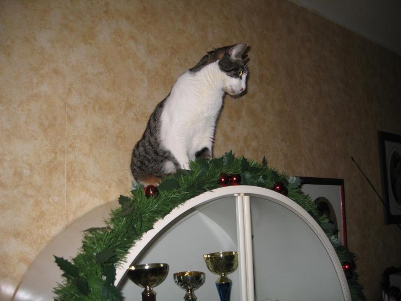 Lily et les décorations de Noël Img_3515
