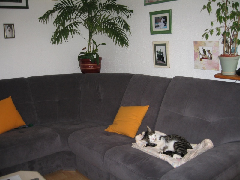 J'adore ce nouveau canapé ! Img_3814