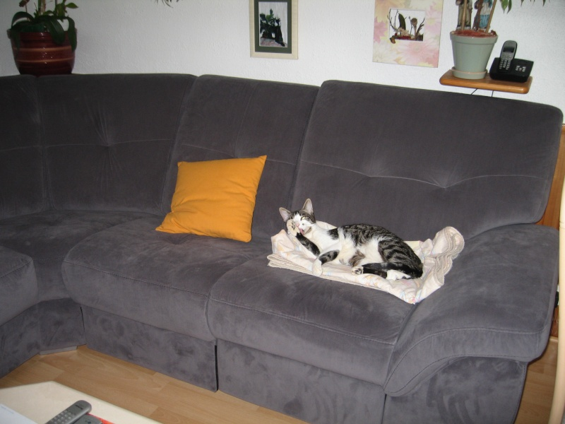 J'adore ce nouveau canapé ! Img_3816