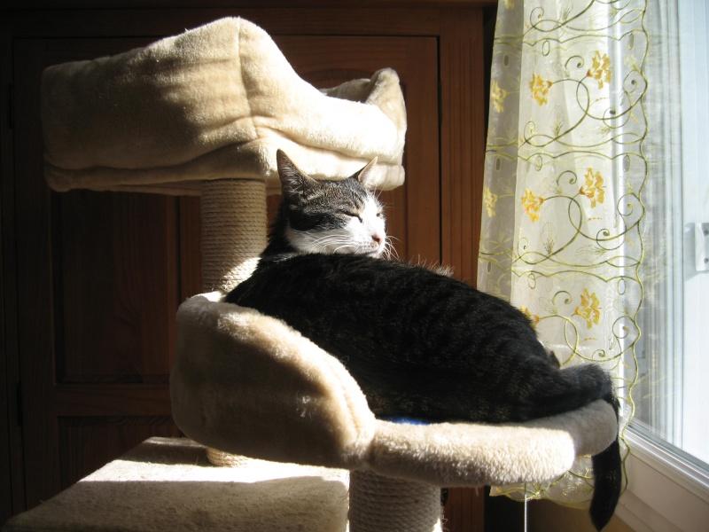 mon arbre à chat au soleil Img_3819