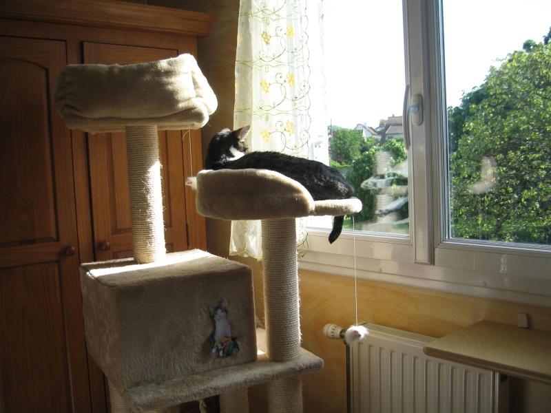 mon arbre à chat au soleil Img_3820