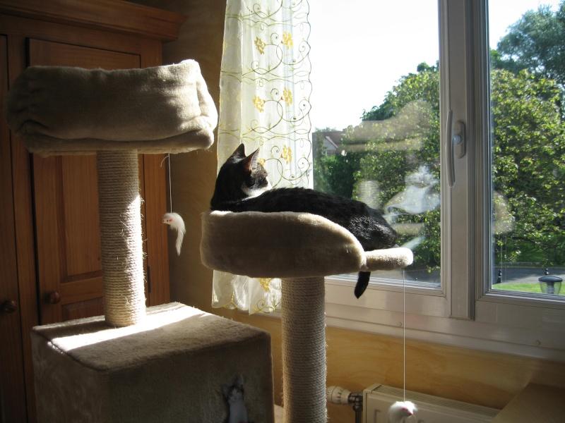 mon arbre à chat au soleil Img_3821