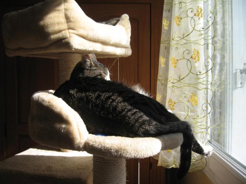 mon arbre à chat au soleil Img_3822