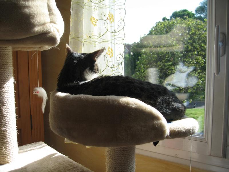 mon arbre à chat au soleil Img_3824