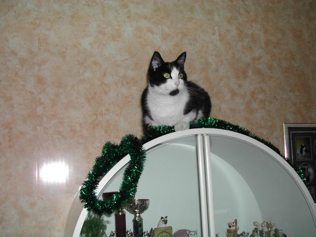 Lily et les décorations de Noël Romao114