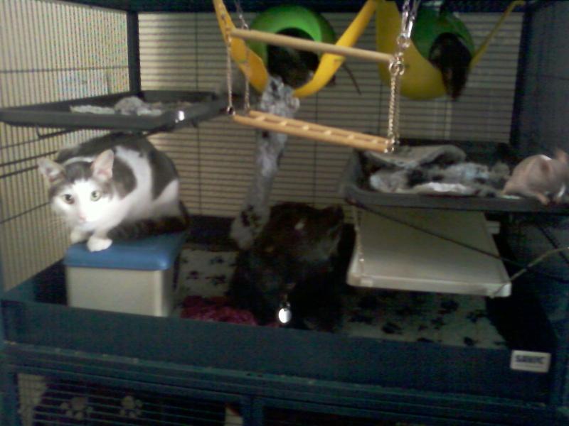 Cohabitation Chien/Rat Photo-37