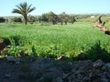 Une maison de la médina en pleine campagne d'Akermoud Akermo16