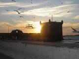 Une marina d'Essaouira dans le port de Mogador Couche10