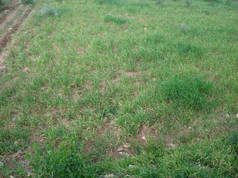 Les délices d'Akermoud Malgré le retard de la pluie avec un espoir intact Dsc00110