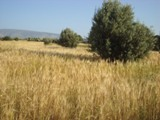 Une maison de la médina en pleine campagne d'Akermoud Dsc07916