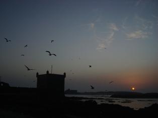Les couchers sublimes à l'horizon d'Essaouira Dsc09517