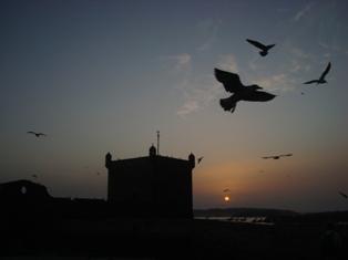 Les couchers sublimes à l'horizon d'Essaouira Dsc09518
