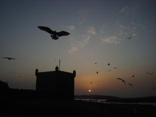 Les couchers sublimes à l'horizon d'Essaouira Dsc09519