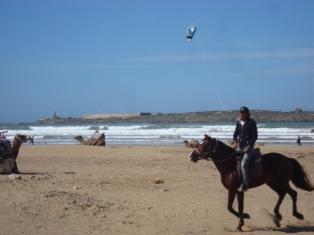 La cornihe d'Essaouira Dsc09619
