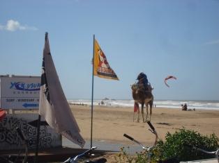 La cornihe d'Essaouira Dsc09727