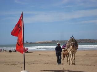 La cornihe d'Essaouira Dsc09728