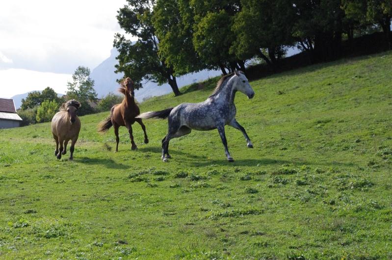 "Concours : ""cheval au galop"" GAGNANTE : TItâne Imgp0210"