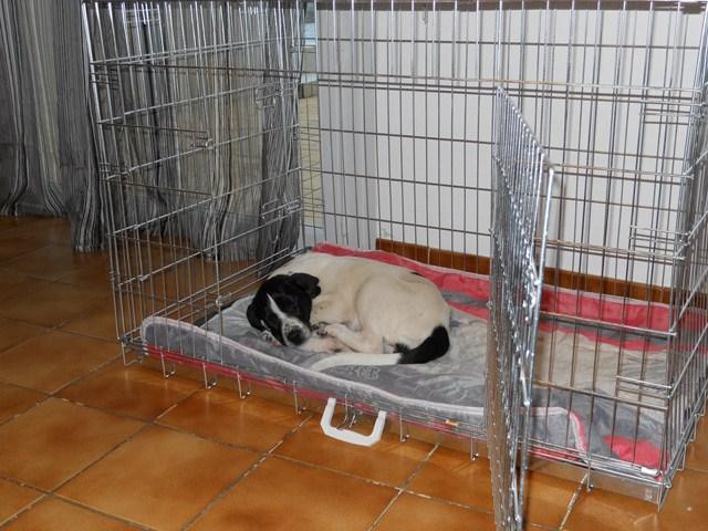 Malpropreté chien de 11 mois - Page 7 Dscn1117