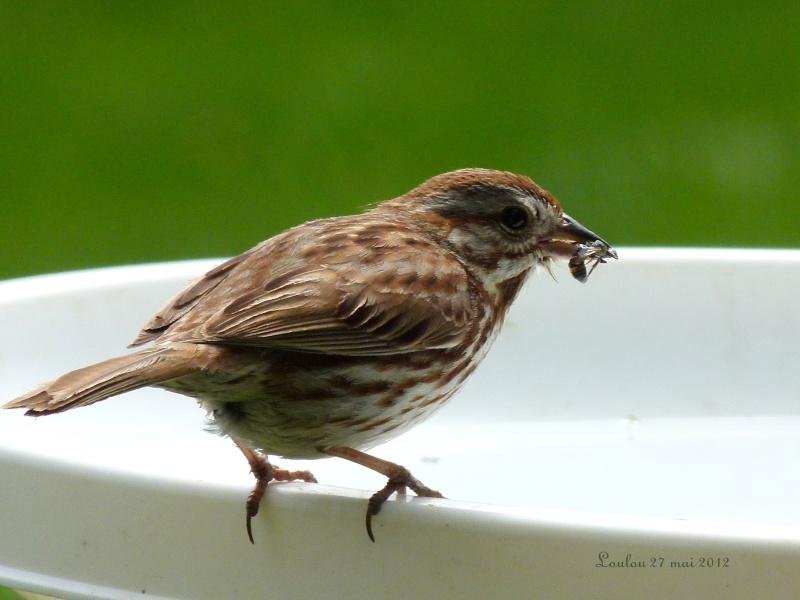 Abreuvoir à oiseaux Oiseau11