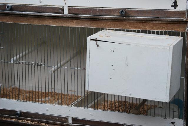 Préparation des cages de repro pour les paddas Images48