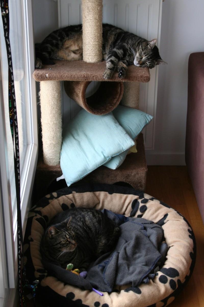 Simba et Peeter, petites boules d'amour... - Page 2 Photo_13