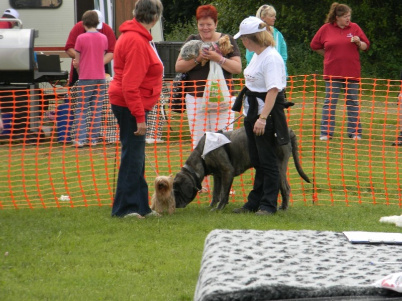 DOG SHOW 2012 - Page 5 39955410