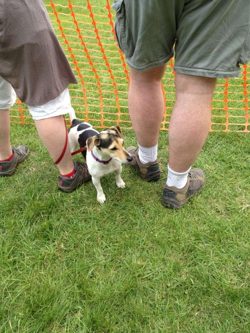 DOG SHOW 2012 - Page 5 Img_0928