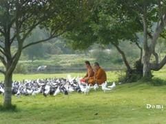 La Chine sac au dos (15): Pèlerinage à la montagne Bouddhiste de Putuo Shan (普陀山) 14_moi10