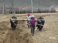 La Chine sac au dos (18) Voyage au Pays du Kham (康巴), Episode 2 : De Shangerila (香格里拉) à Litang (理塘) via Xiangcheng (乡城) Shange12