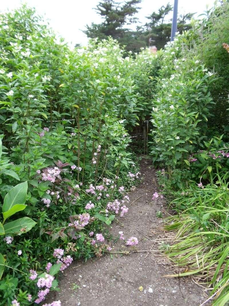 Les Solanums Dscf0515
