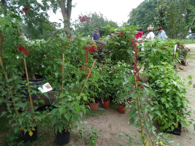 La Fete des Plantes de Nantes aujourd'hui Dscf0539