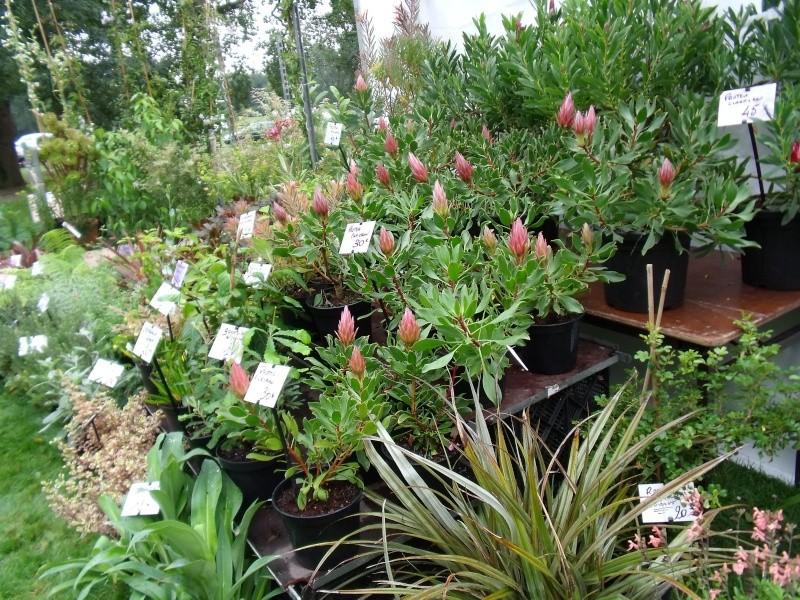 La Fete des Plantes de Nantes aujourd'hui Dscf0540