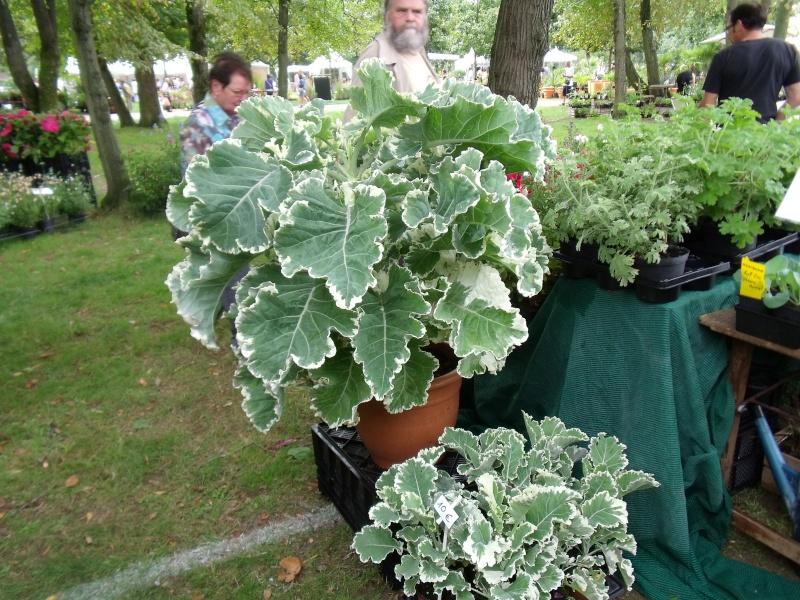 La Fete des Plantes de Nantes aujourd'hui Dscf0541