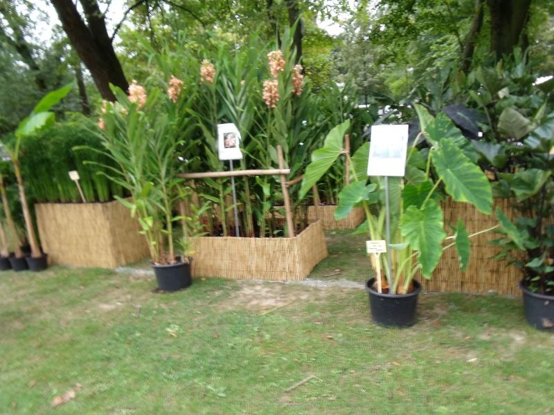La Fete des Plantes de Nantes aujourd'hui Dscf0546