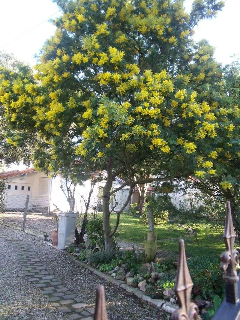 Floraison  exeptionnelle . Dscf0623