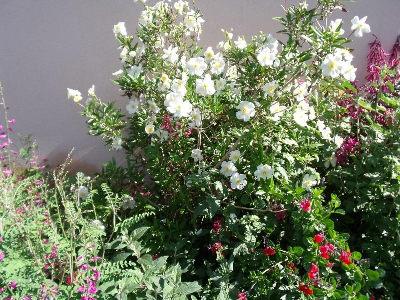 Quelques arbustes a floraison printanière Dscf0728