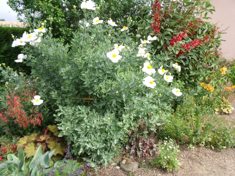 Vue sur notre jardin Dscf0824