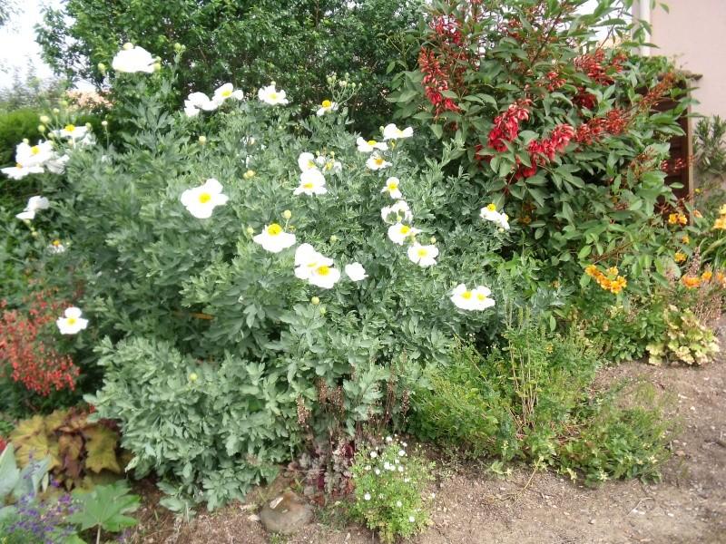 Vue partielle de notre jardin Dscf0825