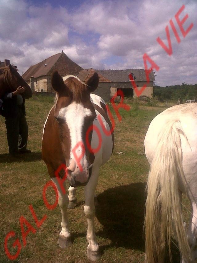 CALINE - OI Poney née en 1996 - adoptée en mars 2012 par Jacques Caline10