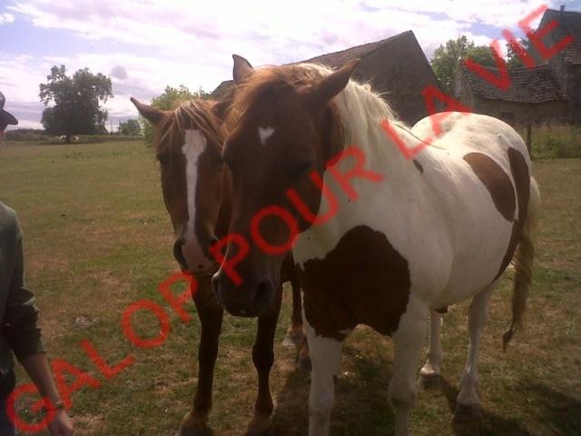 CALINOU - ONC poney  né en 1999 - adopté en août 2011 par Doucette Calino10