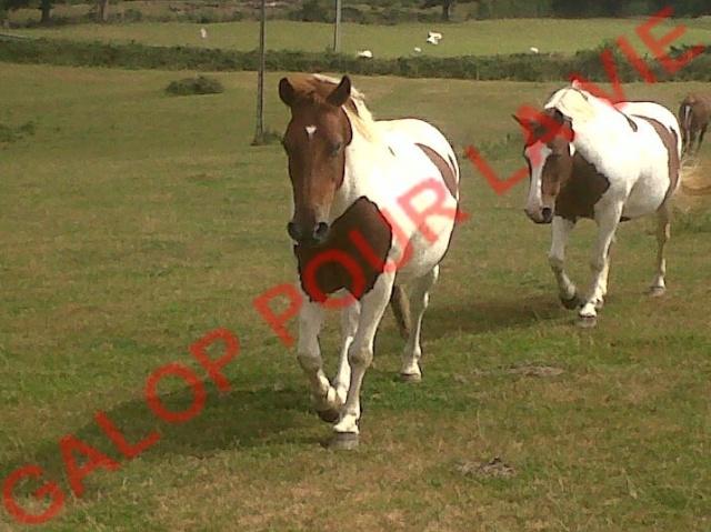 CALINOU - ONC poney  né en 1999 - adopté en août 2011 par Doucette Calino11